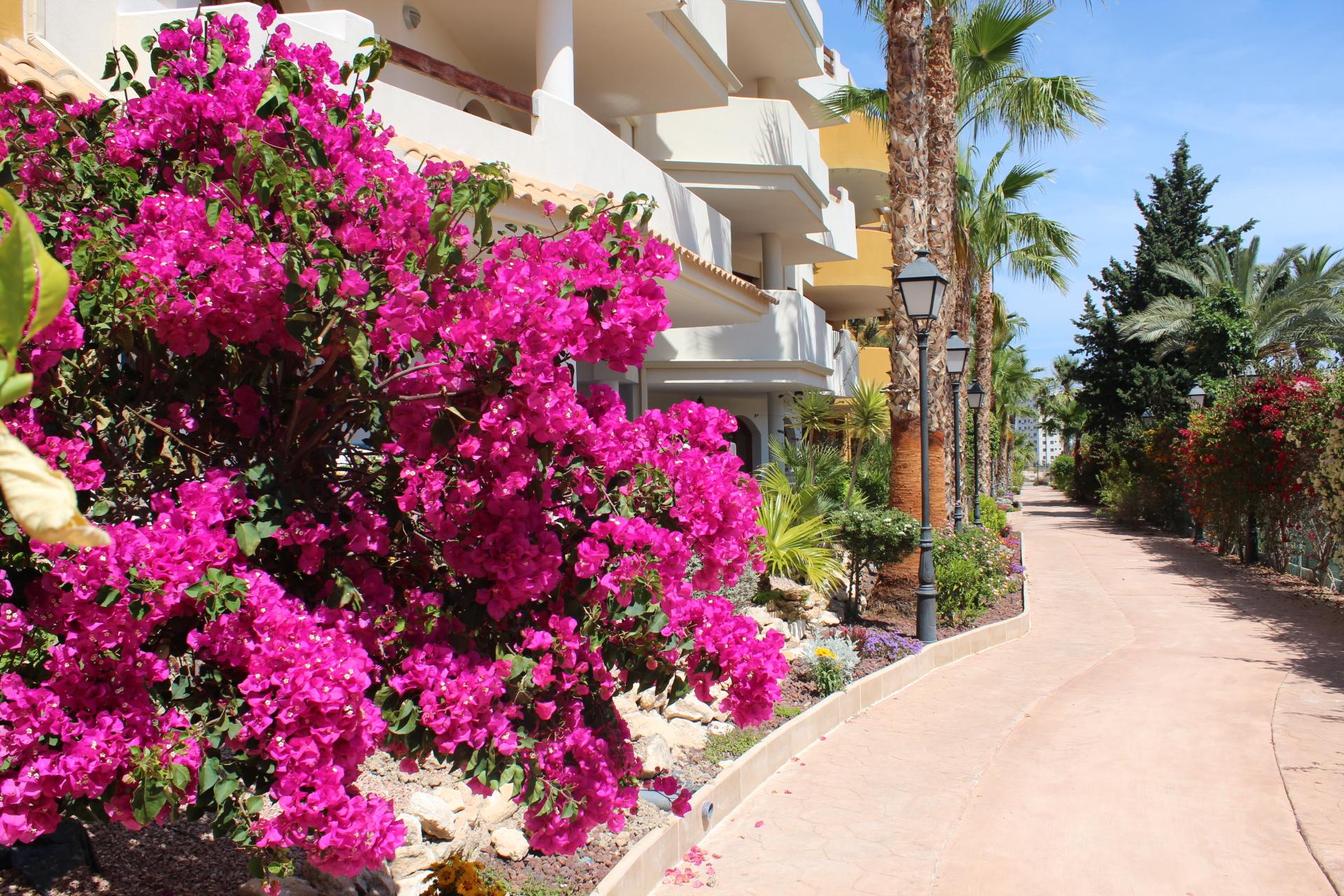 Holiday Rental in Punta Prima Torrevieja.